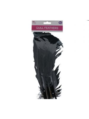BLACK QUILL FEATHERS 10-24IN 4 COUNT