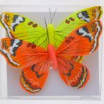 BUTTERFLY FEATHER 2 PACK 5 INCH