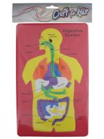 PUZZLE DIGESTIVE SYSTEM